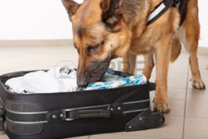 k9 luggage search